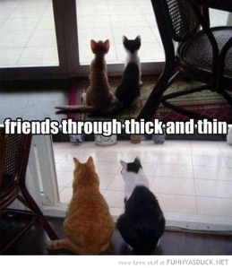 funny-kittens-window-fat-cats-friends-thick-thin-pics