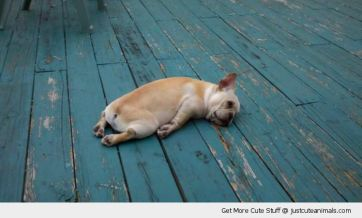 cute-animals-tired-dog-puppy-sleeping-flat-out-pics
