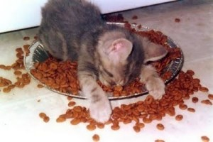 Sleeping-Cat-on-Food